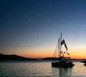 yacht week 8